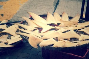 Shark fins left to dry. Photo: Jemapelle/Flickr.