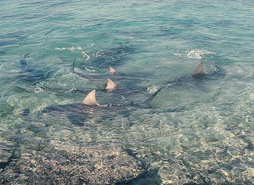Boy survives shark attack - SharkNewz