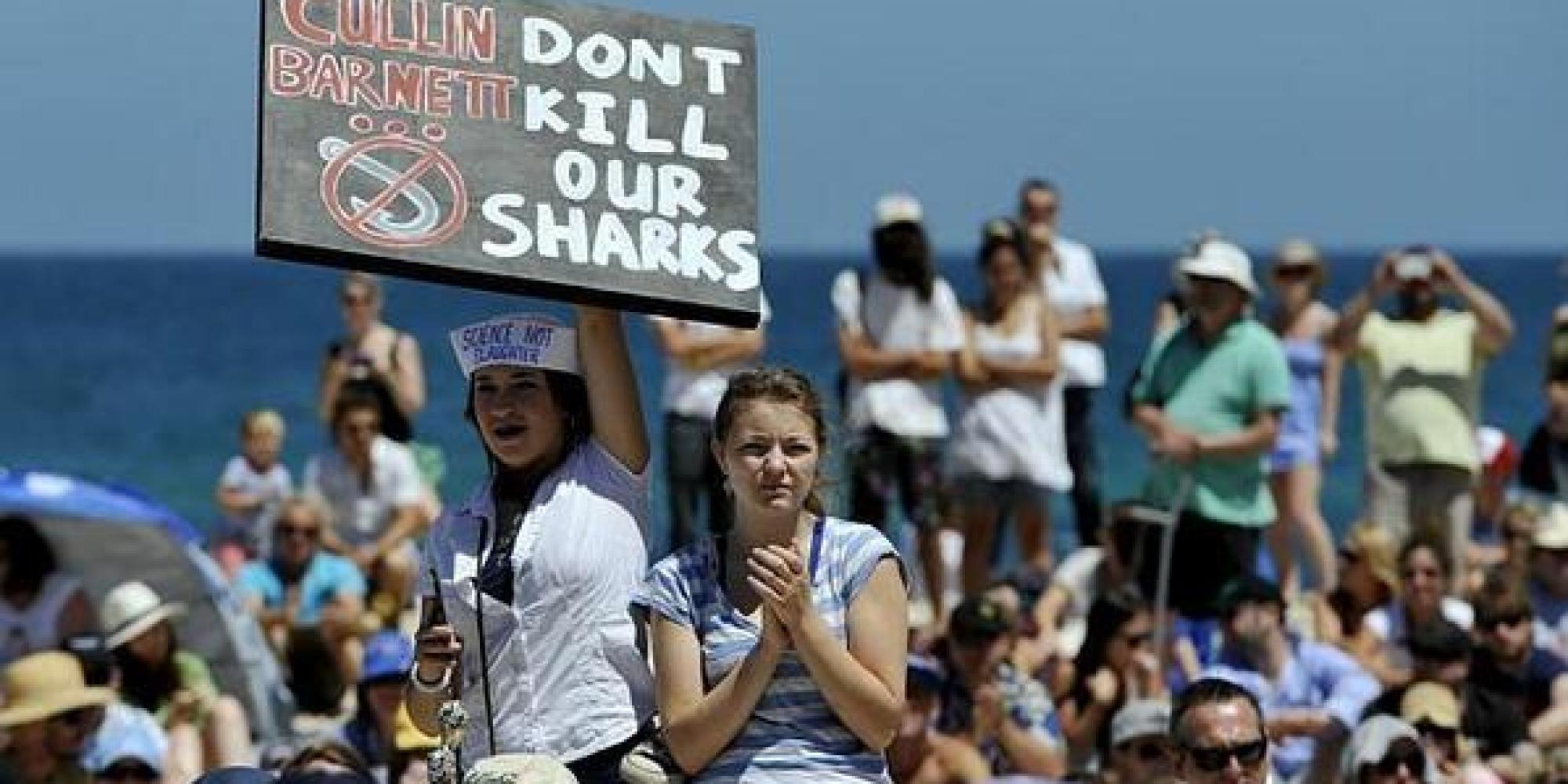 Protests against Shark Cull on Australia's beaches. Photo: Facebook