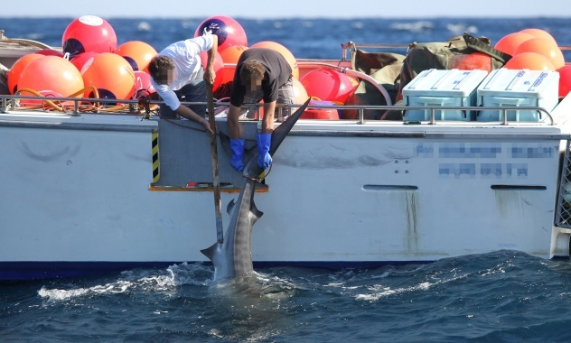 Shark killing in Western Australia