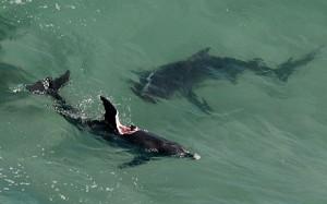 shark-dolphin-atta_3167183c