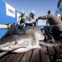 03032017_OCEARCH_Lowcountry_0306_(1)-95bc309f6293bce282a35337b18d22cf