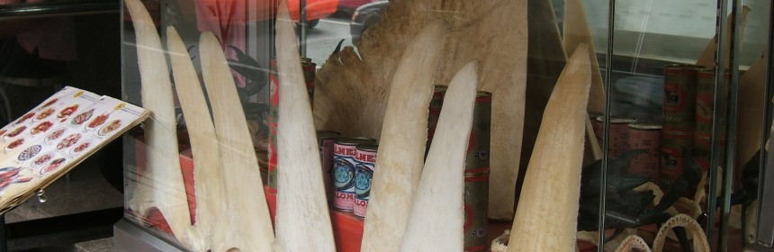 shark fins. photo: Shankar S.:Flickr Creative Commons