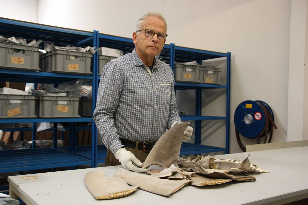 Export officer Bart Langeveld shows the dried shark fins at Schiphol airport.
