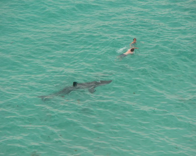 Basking shark and humans in the water. Photo: Candiche/Flickr CC.