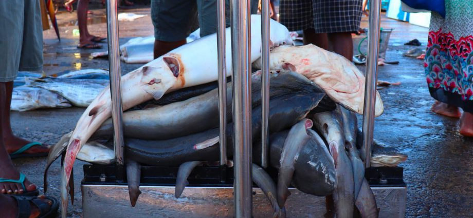 Sharks in a market in Sri Lanka. Photo: Claire Colins.